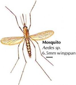 Немаларийни комари