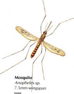 Маларийни комари